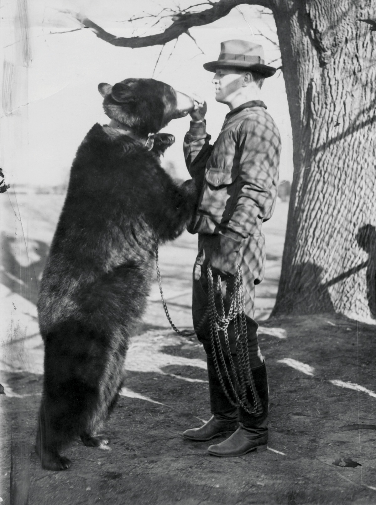 A vintage photograph of a bear standing next to its handler.