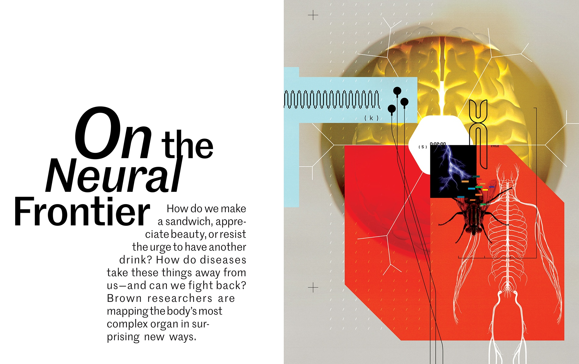 Brain science illo showing a brain, nervous system, dna marker, and a fly