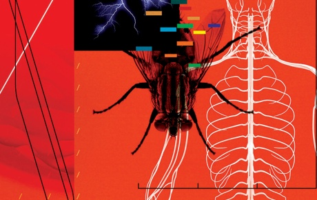 Brain science illo showing nervous system, dna marker, and a fly